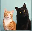 5 zlepšováků pro chovatele koček