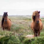 Minerální doplňky pro koně - jak se v nich neztratit