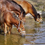 Léto a kůň - fotogalerie