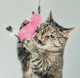 Na domácí zvířata se o Vánocích myslelo odjakživa. Přečtěte si naše tipy na dárky