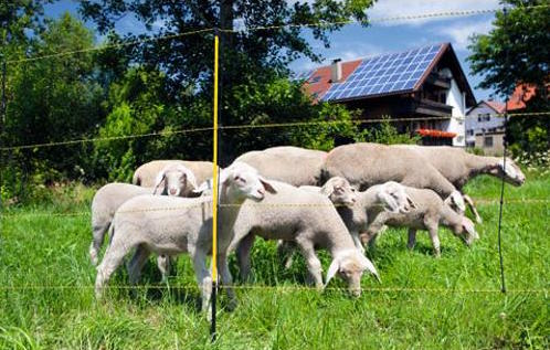 el. síť na ovce