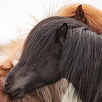 Fotosoutěž Pony, léto, děti
