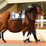 5 vtipů o koních, které musíte znát