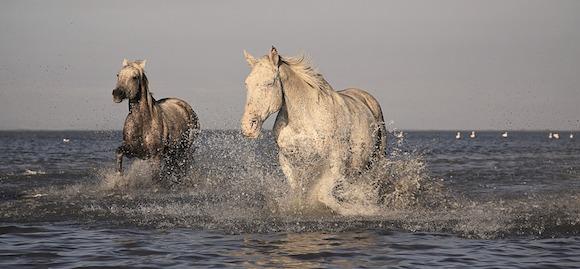 Jak pečovat o koně v letním období