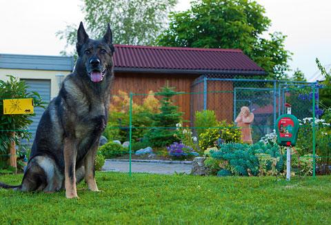 Elektrický ohradník pro psa je dobré řešení zejména v kombinaci s pevným oplocením