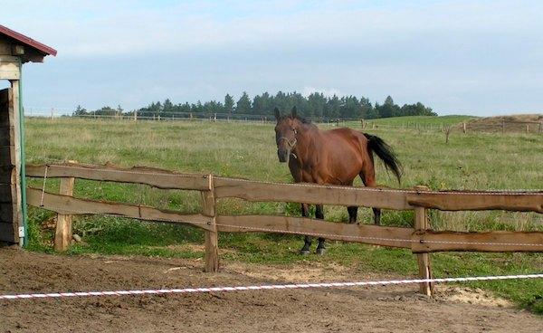 ohrada pro koně