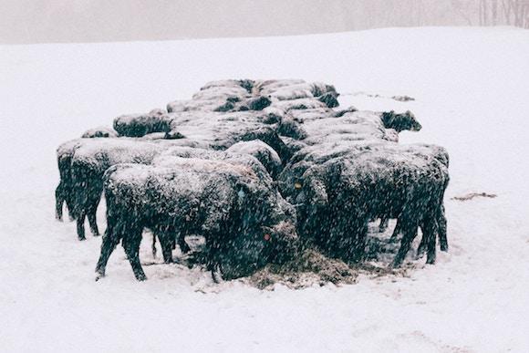Péče o elektrický ohradník v zimě