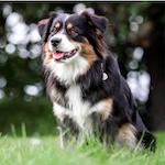 Prémiové krmivo pro psy a kočky NUTRLIOVE v nabídce našeho e-shopu!
