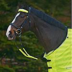 Buďte vidět! Reflexní prvky pro psy, pro koně i jejich majitele