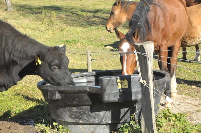 Plastový napájecí žlab JFC na 600 l v kruhovém provedení umožňuje současné napájení na dou sousedících pastvinách, 10 let v provozu, bez problému 60 ks krav s telaty