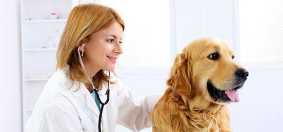 Vitamíny a doplňky potravy pro koně, psy a kočky