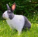 Začínáme chovat králíky