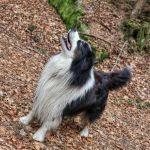 Jaké veterinární přípravky pro psy?
