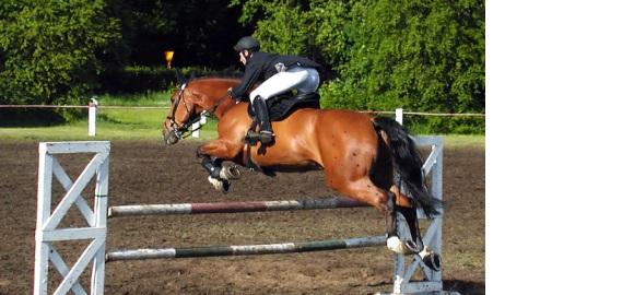 Kamaše pro koně, bandáže, šlachovky, zvony pro koně.. Víte, které vybrat?