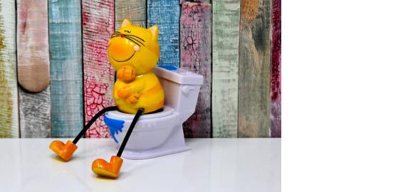 Jak vybrat kočičí WC