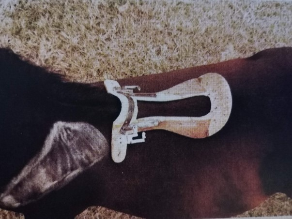 Kostra sedla na koni
