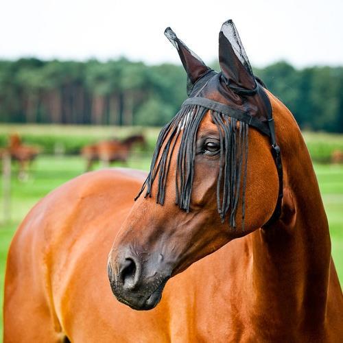 Výsledek obrázku pro třásně pro koně kamír