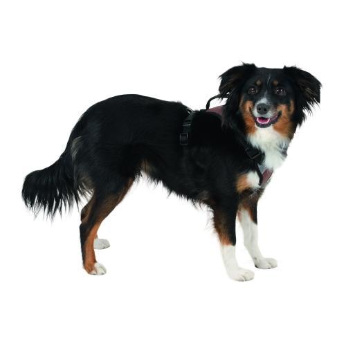Postroj na psa Pulsive - 50-62 cm
