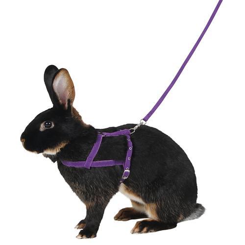 Postroj pro králíky pro agility - vel. M