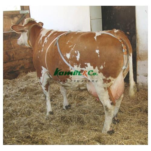 Bandáž proti výhřezu dělohy pro krávy, nylonová Bandáž proti výhřezu dělohy pro krávy, nylonová