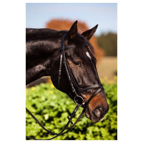 Kožená uzdečka Kerbl, černá/hnědá - hnědá, vel. Pony Uzdečka Standard, podlož.+otěže, hnědá