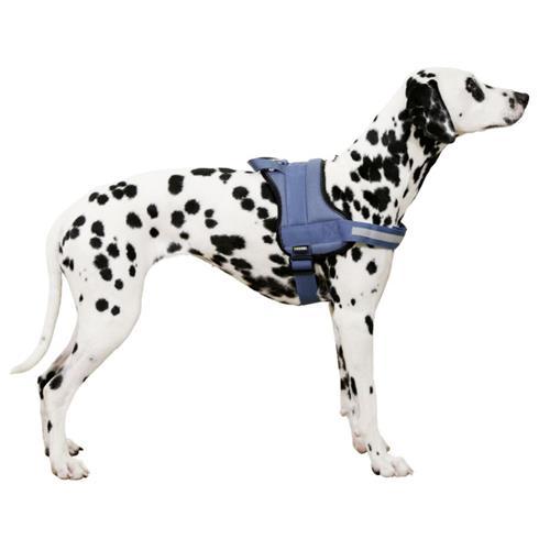 Postroj pro psy Maestro, petrol - 45 - 60 cm Postroj pro psy Maestro, petrol, 45-60 cm