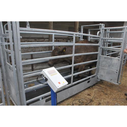 Ližinová váha 2 x 800 mm, do 1500 kg s indikátorem FORMATIC7D Ližinová váha 2 x 800 mm, do 1500 kg s indikátorem FORMATIC7D