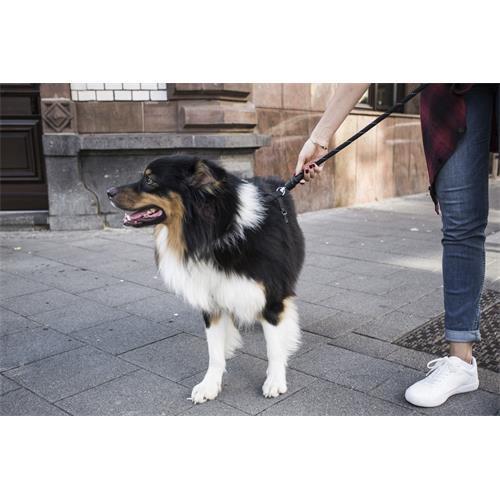 Set obojek a vodítko pro psy GoLeyGo, černé - vel. M, max. 60 kg Set GoLeyGo černé, 20 mm, max. 60 kg, vel. M