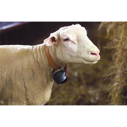 Zvonec pro ovce plechový 64 x 50 mm Zvonec pro ovce plechový 64 x 50 mm