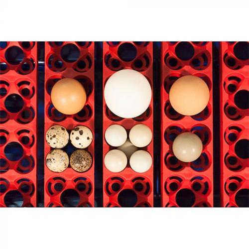 Digitální automatická líheň Borotto pro 24 vajec. Digitální automatická líheň Borotto pro 24 vajec - detail.