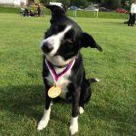 Canvit pro podporu pohybového aparátu psů
