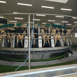 Spuštění 2. robotické kruhové dojírny DairProQ
