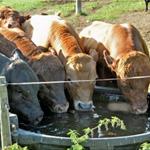 Napájení zvířat na pastvině z beztlakých nádrží