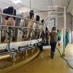 Spouštění nové kruhové dojírny GEA v ZD Sloupnice