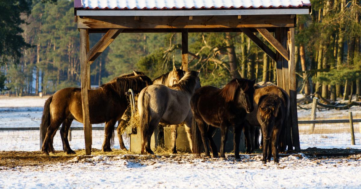 Přikrmování koní ve výběhu