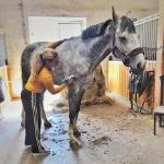 Stříhání koní, rady a tipy